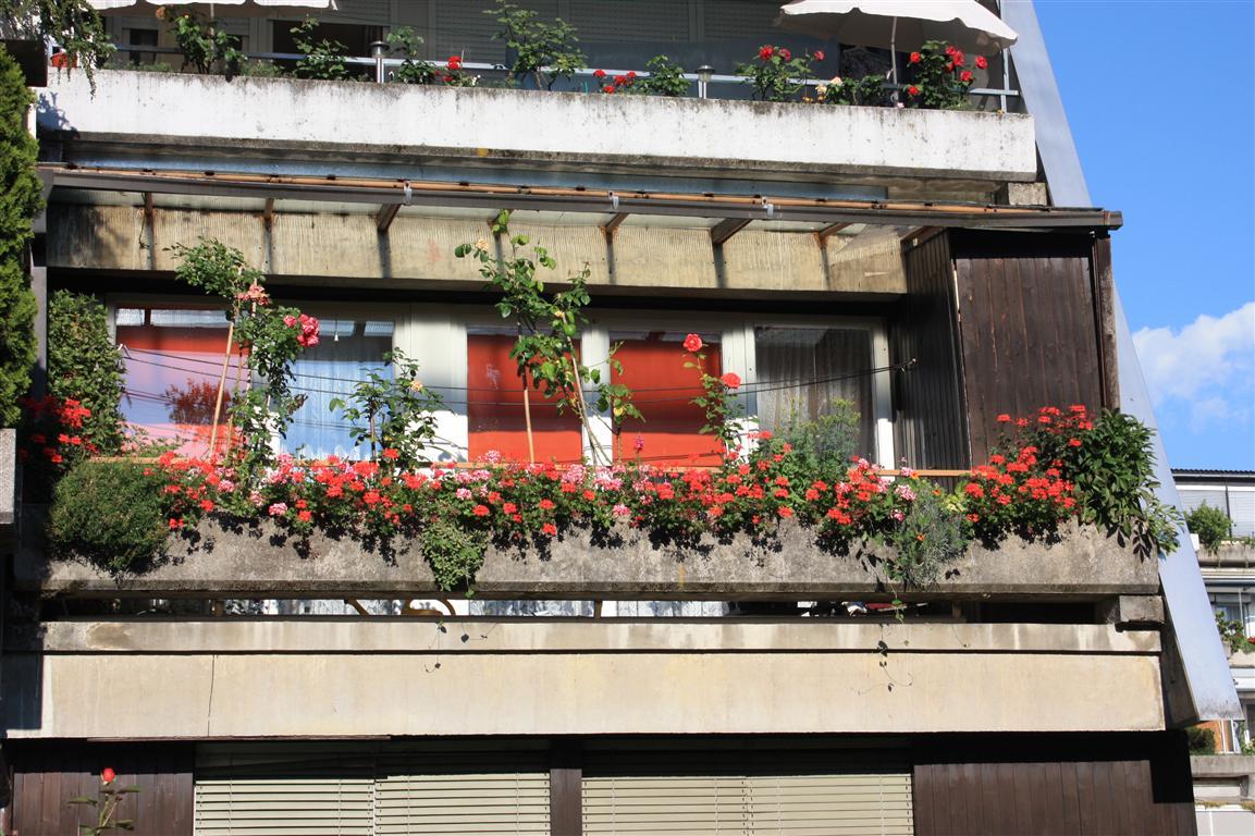 Cvetoče Koseze 2010