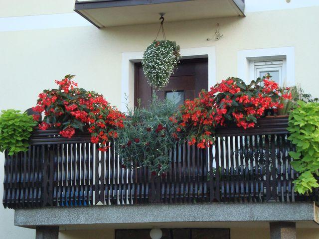 Cvetoče Koseze 2008