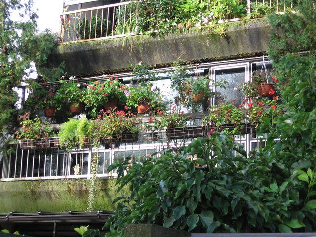 Cvetoče Koseze 2005