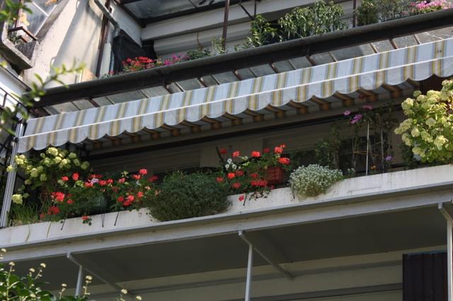 Cvetoče Koseze 2009